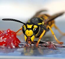 Wasp eating jelly by pixelnest