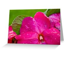 Wet and Pink Greeting Card