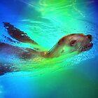 Sea Lion by venny