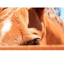Shy Horse Photographic Print