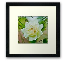 A Lighter Shade Of Green Framed Print