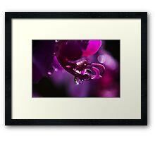 Sparkling Orchid Framed Print