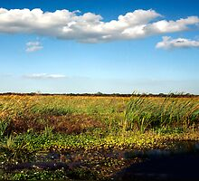 Alligator on Floodplain. Wetlands Park. by chris kusik