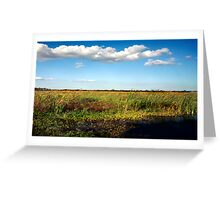 Alligator on Floodplain. Wetlands Park. Greeting Card