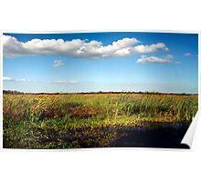 Alligator on Floodplain. Wetlands Park. Poster