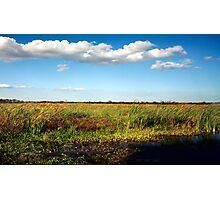 Alligator on Floodplain. Wetlands Park. Photographic Print