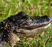 Alligator Portrait #2. Melbourne Shores. by chris kusik