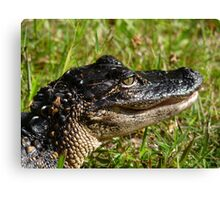 Alligator Portrait #2. Melbourne Shores. Canvas Print