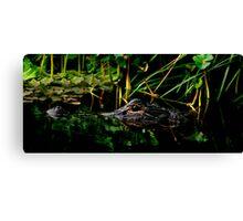 Alligator Portrait #3. Three Lakes W.M.A. Canvas Print