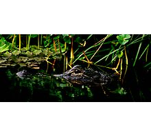 Alligator Portrait #3. Three Lakes W.M.A. Photographic Print
