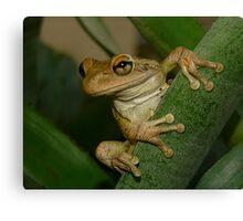 Tree Frog Portrait #2. Canvas Print