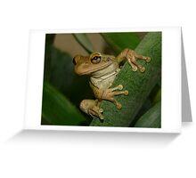 Tree Frog Portrait #2. Greeting Card