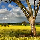 Tree in Canola Field by Hans Kawitzki