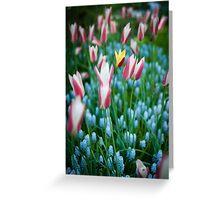 Yellow Tulip @ Keukenhof Greeting Card