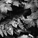 Muir Woods, California by Rodney Johnson
