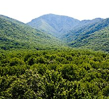 Smoky Mountains by pharris1