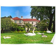 Geese on Palace of Fine Arts Lawn Poster