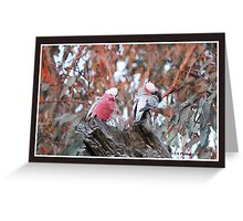 Galahs in Landscape Greeting Card