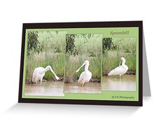 Spoonbill in landscape Greeting Card