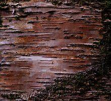Barking up the wrong tree  by Tamarama72