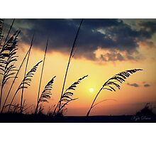 peace today Photographic Print