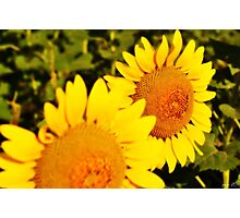 Late Summer Bloom Photographic Print