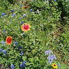 Texas Wildflowers by marilittlebird