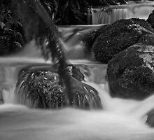 Rainforest gallery by bluetaipan