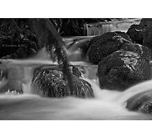 Rainforest gallery Photographic Print