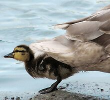 Duck Tails by Ellen Cotton