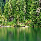 Reflections of Green by Tori Snow