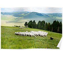 Tending the flock, Sibillini Mountains, Umbria Poster
