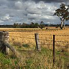 Farm property at Grenfell by Darren Stones