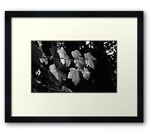 Muir Woods, California Framed Print
