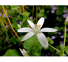 Wildflower Photographic Print