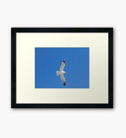 Blue Sky and Bird Framed Print