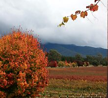 Feathertop Winery - Porepunkah Victoria by OzNatureshots