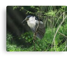 Watcher in the Reeds Canvas Print