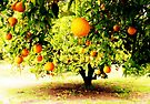 Orange Tree by Marianna Tankelevich