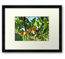 Fruits of nature Framed Print