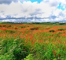 Poppy Field Skies-moving light. by Mark Haynes Photography