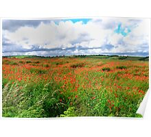 Poppy Field Skies-moving light. Poster