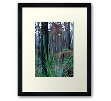 Grass Tree (Xanthorrhoea) Framed Print
