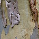 Tree Texture #3 by Ray Fowler
