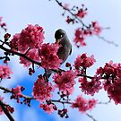 Bird in a tree by Adriano Carrideo