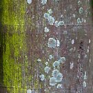 Tree Texture #6 by Ray Fowler