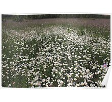 White and purple wildflowers  Poster