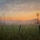 Yarra Valley Sunrise by Margaret Metcalfe