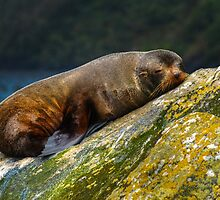 0509 Seal Rock by DavidsArt