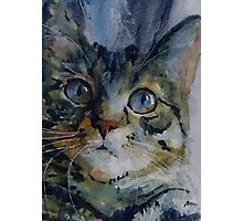 Mystery Tabby Photographic Print